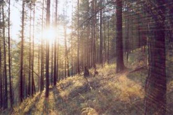 В Марий Эл стабилизировалась ситуация с лесными пожарами