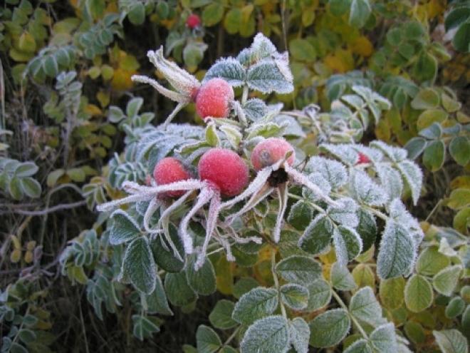 Синоптики прогнозируют первые заморозки