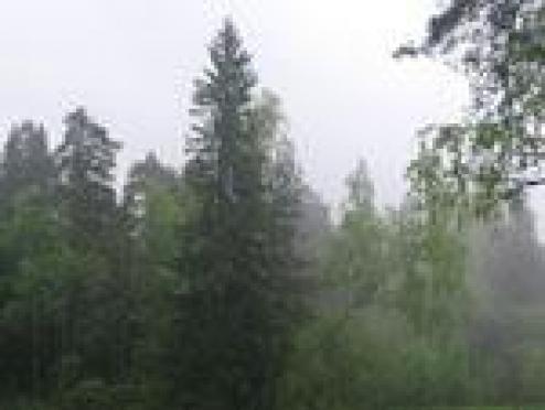 Молния нанесла удар по марийскому лесу