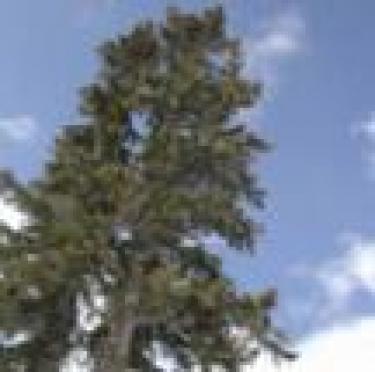 В Марий Эл вновь запрещено свободное посещение лесов