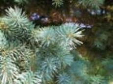 Леса Марий Эл восстановлены на 50% от плана