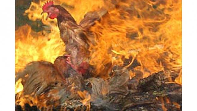 В Новоторъяльском районе в пожаре сгорели 20 кур