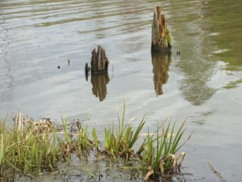 В Марий Эл чистыми прудами хотят заманить туристов и рыбаков