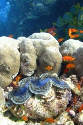 Коралловая симфония постер