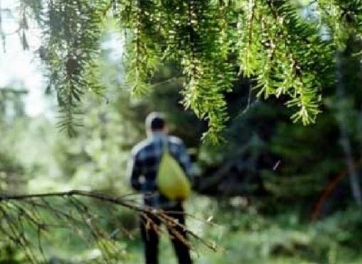Жители соседних республик не умеют ориентироваться в марийских лесах