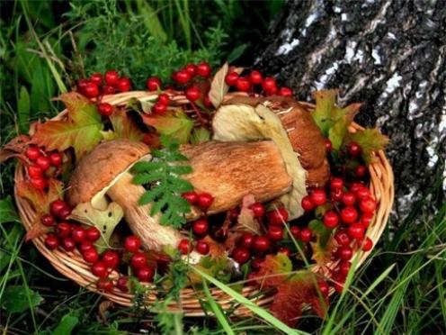 Почти 70 процентов посетителей портала «МариМедиа» ходят в лес за грибами