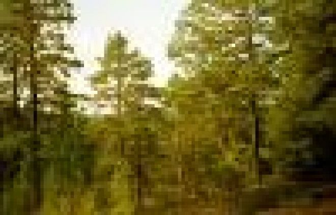 Отсутствие нового Лесного Кодекса тормозит распространение долгосрочной аренды в Марий Эл