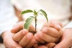 Социально ориентированным некоммерческим организациям Марий Эл предлагают объединиться