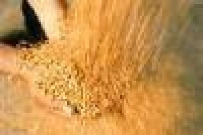В Марий Эл огонь уничтожил 100 тонн зерна