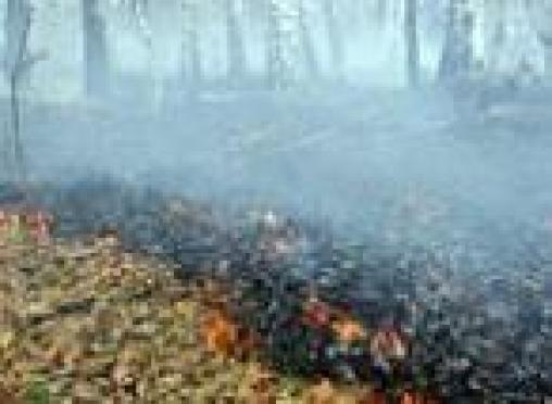 В лесах Марий Эл продолжают регистрировать очаги возгорания