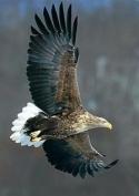 Специалисты обнаружили в республике двух редких птиц