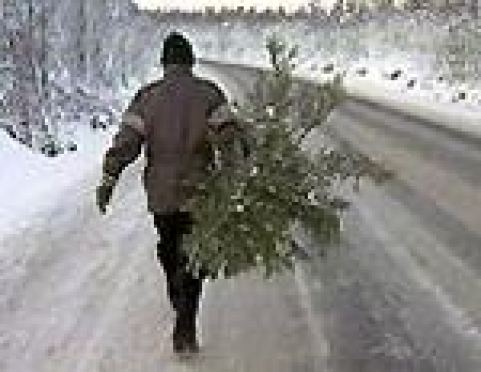 В Марий Эл лесные патрули завтра заступают в дозор