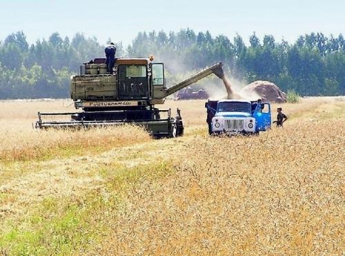 Урожайность зерна в Марий Эл составляет 18 центнеров с гектара