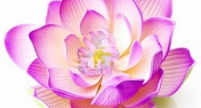 В Йошкар-Оле откроется большая ярмарка «Доброта. Здоровье. Красота-2013»