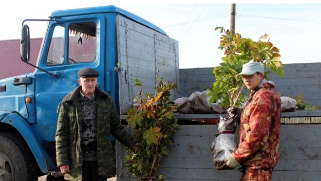 В Йошкар-Оле на бульваре Ураева появятся каштаны