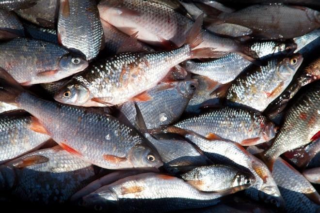 ловля рыбы в сентябре сетями