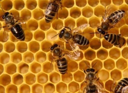 В Марий Эл подготовлен документ по пчеловодству