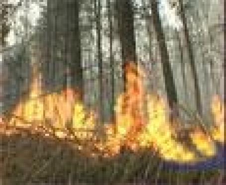 В майские праздники в Марий Эл горели Волжское, Кокшайское и Куярское лесничества