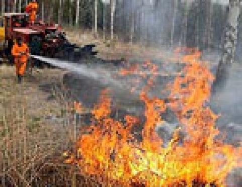 Сухая трава прибавила работы пожарным Марий Эл