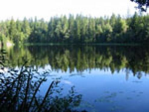 Воспитанники Новотроицкой колонии делают озёра Марий Эл чище