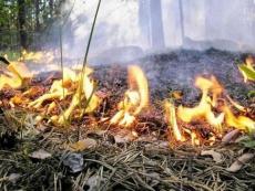 Пожарные Марий Эл опасаются нового шквала лесных пожаров