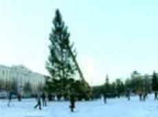 Сегодня в столице Марий Эл установят новогоднюю ель