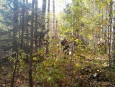 Лесная кормушка для животных помогла найти заблудившихся в лесу пенсионерок