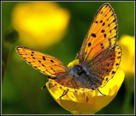 В Йошкар-Оле готовится к открытию эксклюзивная выставка бабочек
