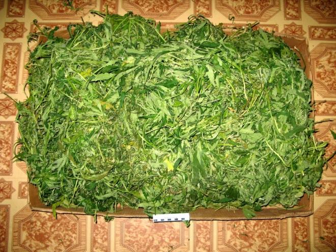 В Марий Эл изъято 2 килограмма марихуаны и 1,5 килограмма конопли