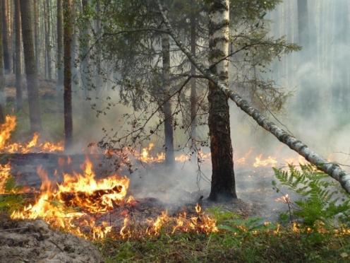 В выходные в Марий Эл горели леса