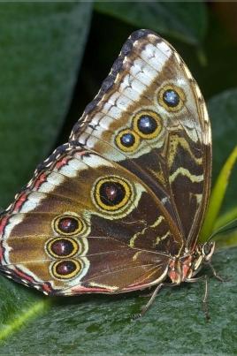 Живые тропические бабочки постер