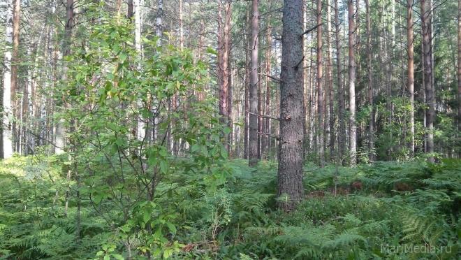 Жительница Козьмодемьянска 18 августа ушла в лес и пропала