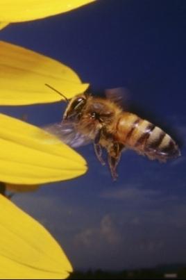 Конференция по пчеловодству постер