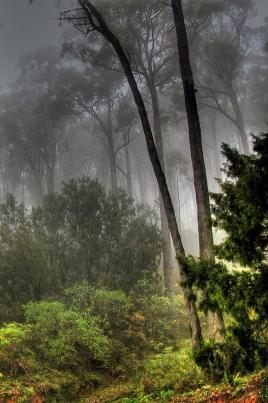 Амазонка постер