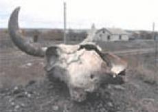 В Горномарийском районе Марий Эл обнаружены бесхозные сибиреязвенные скотомогильники в полуразрушенном состоянии
