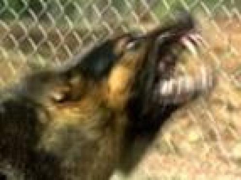 Около 2000 жителей Марий Эл пострадали от укусов домашних и бездомных животных