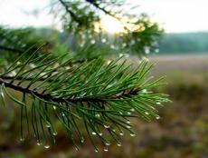 Жители Марий Эл готовы всем миром помочь в лесовосстановлении