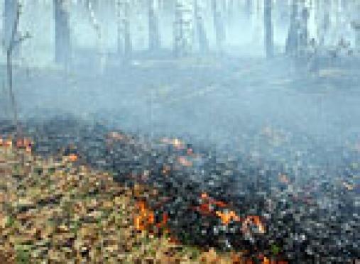 Леса Марий Эл горят по вине грибников и отдыхающих