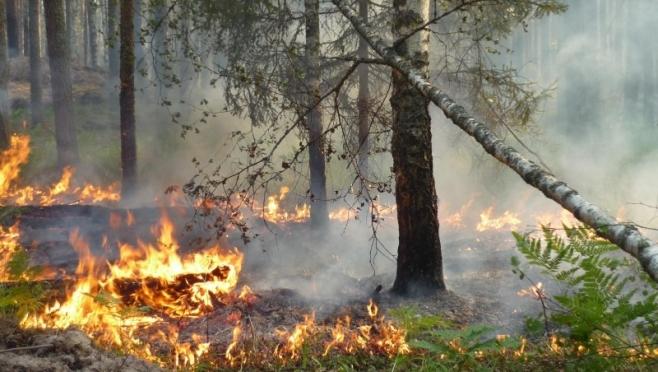 Минприроды РМЭ благодарит жителей Моркинского района за помощь в тушении лесного пожара
