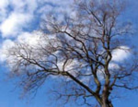 На следующей неделе погода в Марий Эл может в корне поменяться