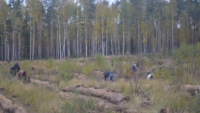 В Марий Эл началась весенняя посадка леса