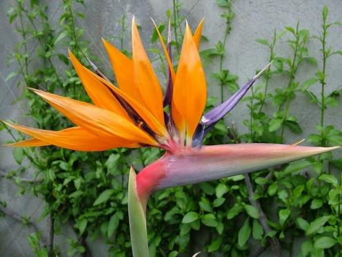 Цветочные салоны могут оставить без цветов