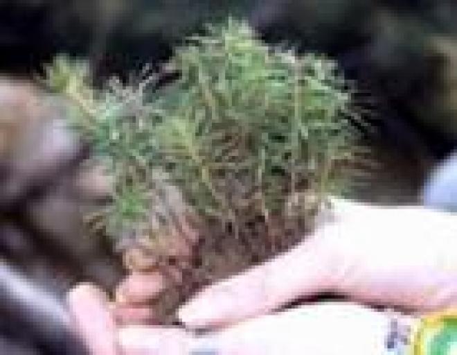Лесничества Марий Эл готовятся к весенним лесокультурным работам