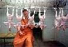 Правительство Марий Эл в 2010 году делает ставку на аграриев