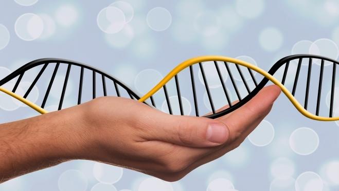 Как сделать тест на ДНК