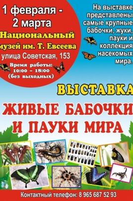 Живые бабочки и пауки мира постер