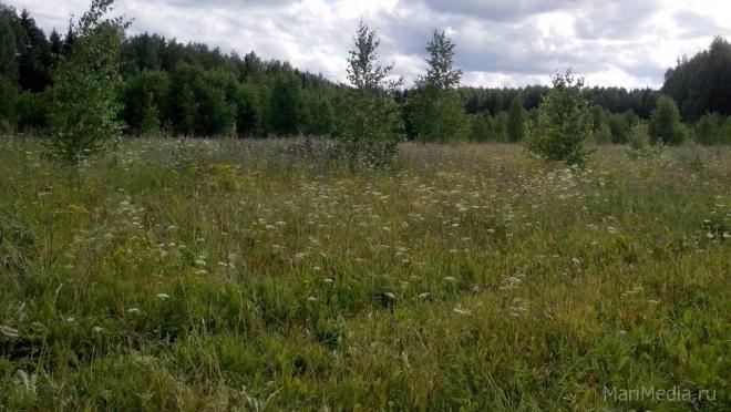 В Советском районе в поле найдено тело 65-летней женщины