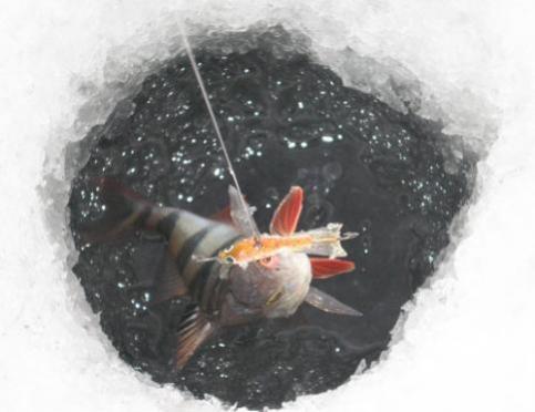 Энергетики соревновались в ловле рыбы