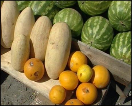 В Марий Эл торгуют качественными бахчевыми