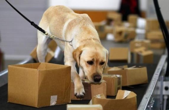 В силовом ведомстве Марий Эл появились собаки-детекторы